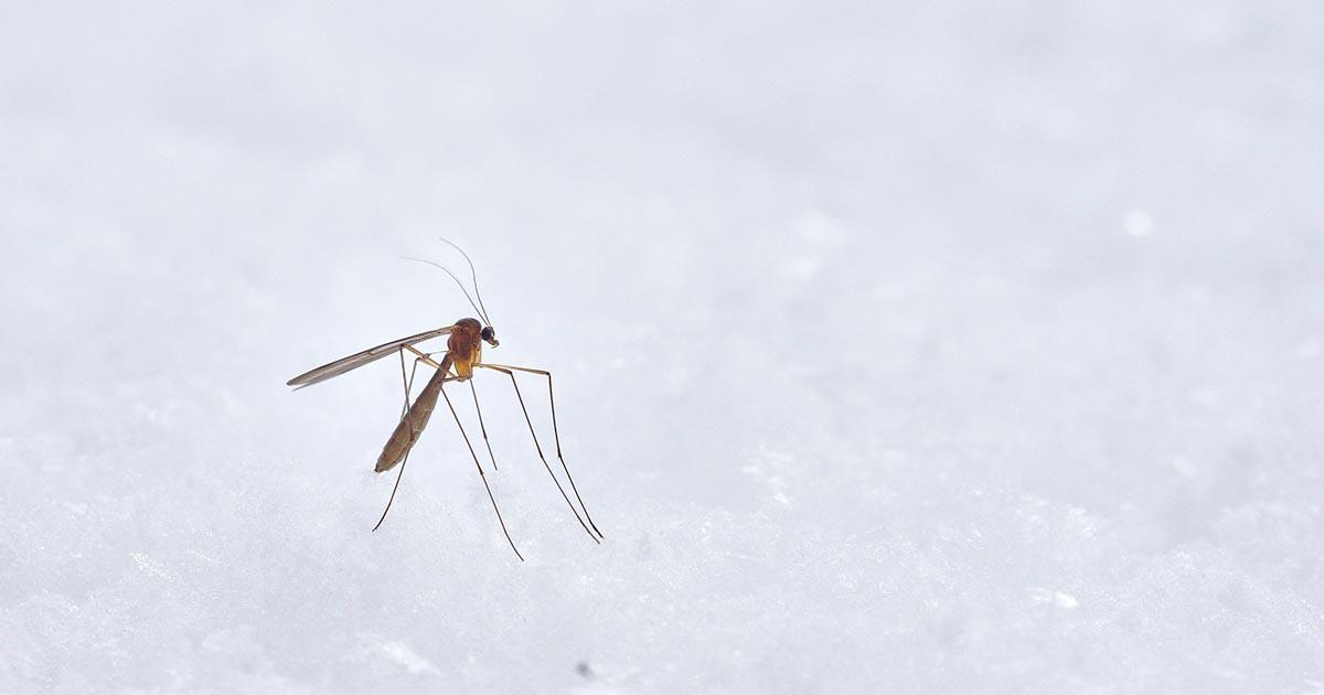 蚊イメージ画像